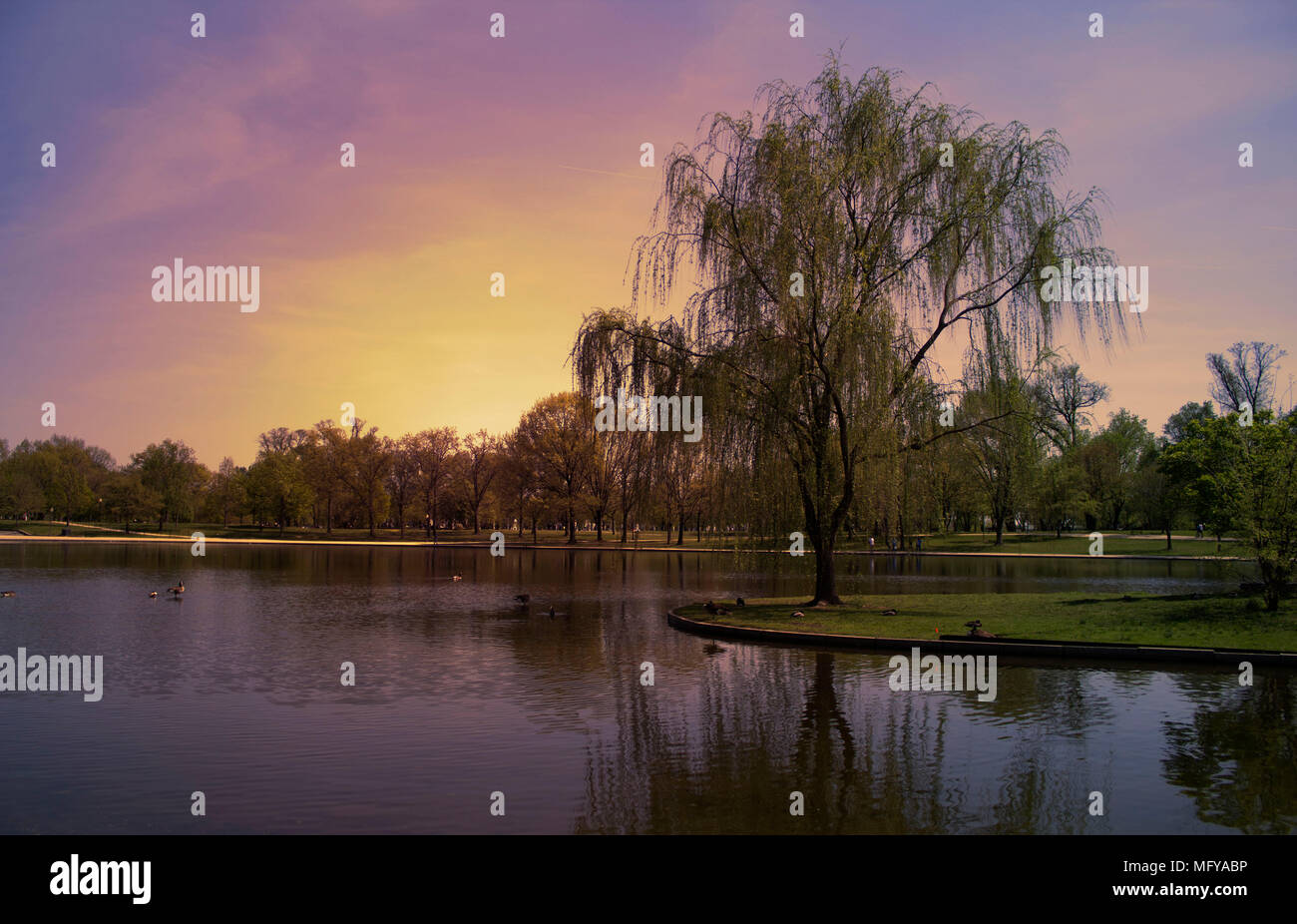 Willow Tree in Constitution Gardens, Washington DC Stock Photo ...