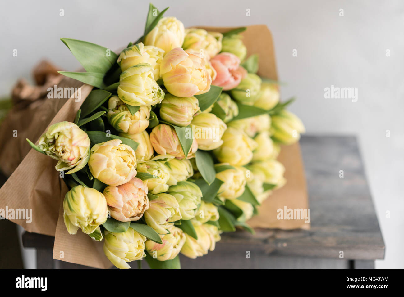 Tulips of pastel yellow color big buds floral natural backdrop tulips of pastel yellow color big buds floral natural backdrop unusual flowers unlike the others shallow focus wallpaper horizontal photo mightylinksfo