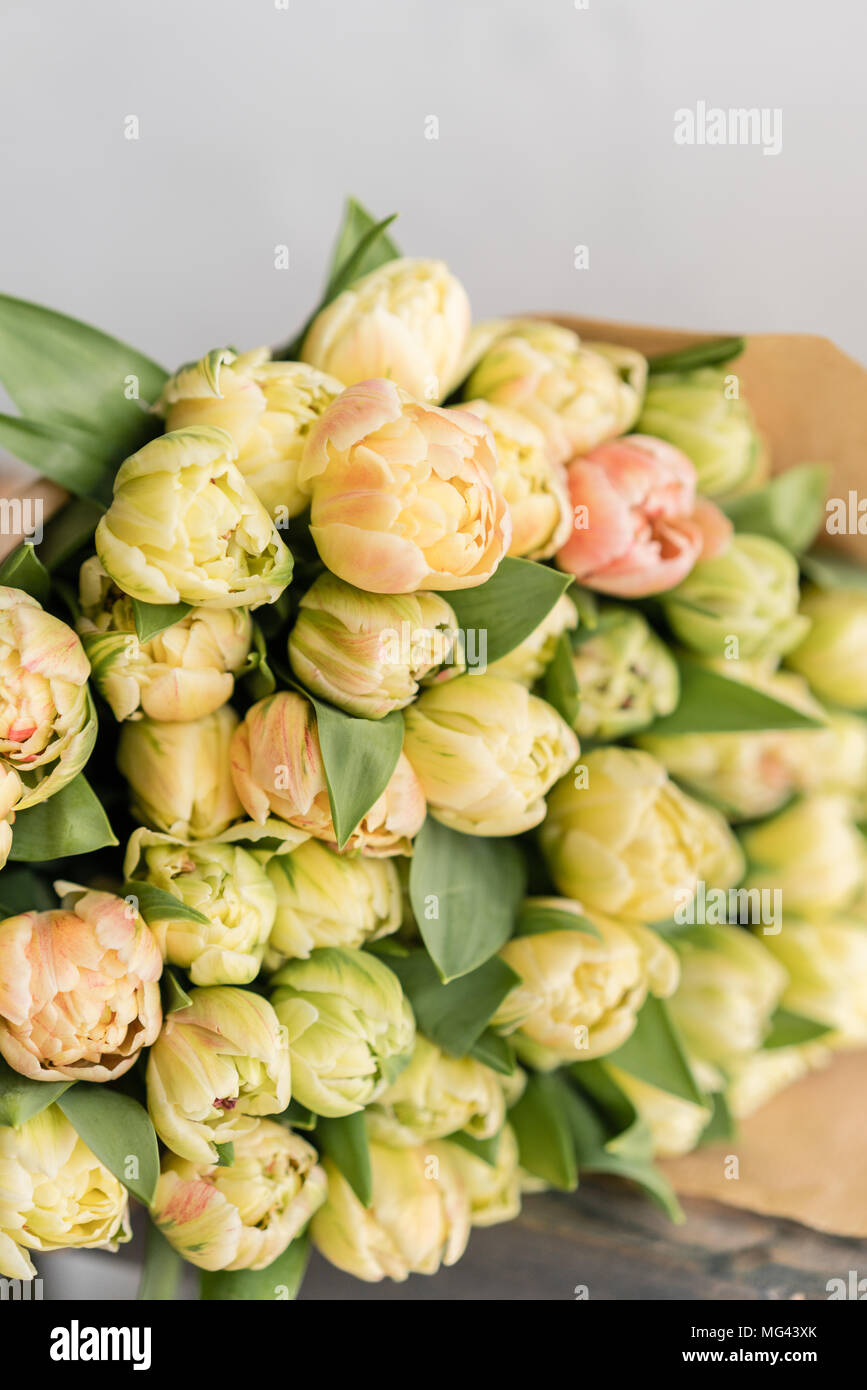 Tulips of pastel yellow color big buds floral natural backdrop tulips of pastel yellow color big buds floral natural backdrop unusual flowers unlike the others shallow focus wallpaper vertical photo mightylinksfo