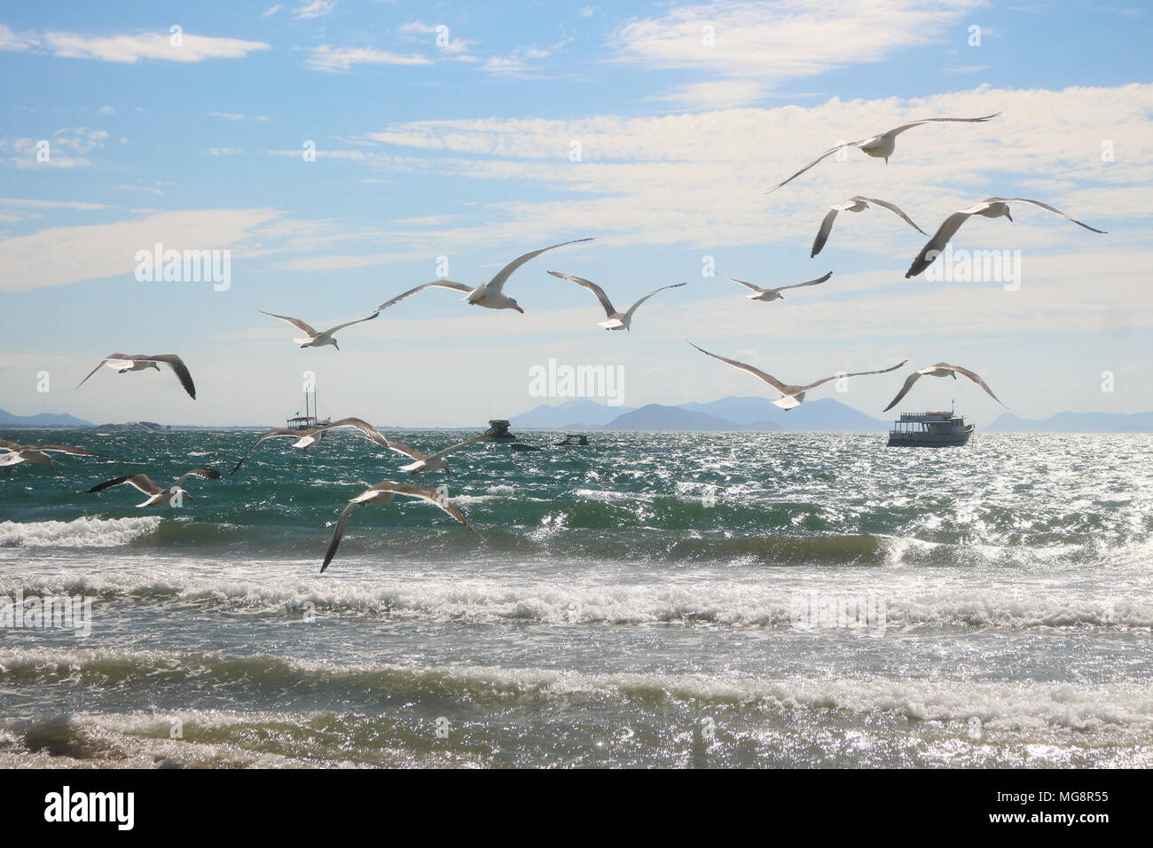 A flock of seagulls on the beach. A flight over the sea and over the boats. The certainty of not having destiny and a light life. harmony, beauty . - Stock Image