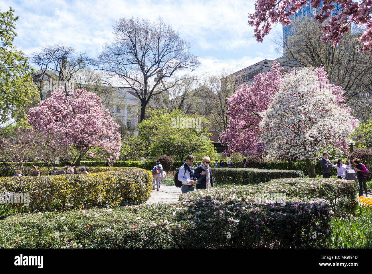 the conservatory garden at springtime is colorful central park nyc - Central Park Conservatory Garden