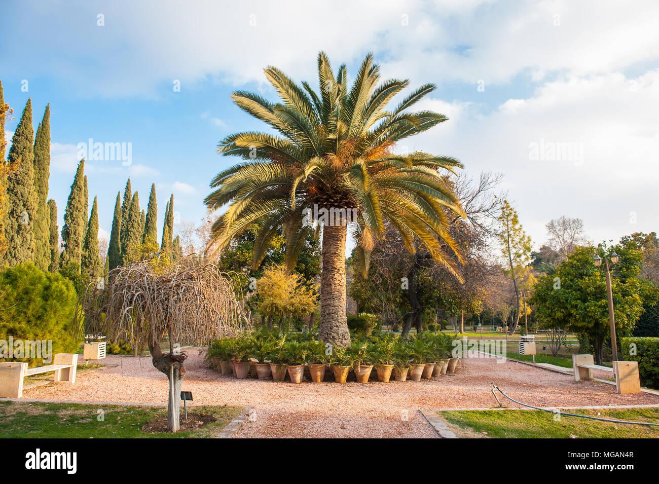 Palm tree in the Eram Garden, historic Persian garden in Shiraz ...