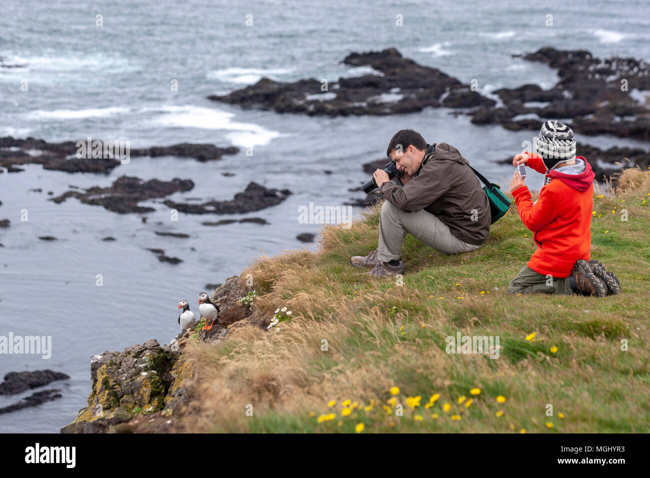 Father and son taking pictures in Látrabjarg cliffs with Atlantic Puffins in Bjargtangar, Westfjords, Iceland Stock Photo