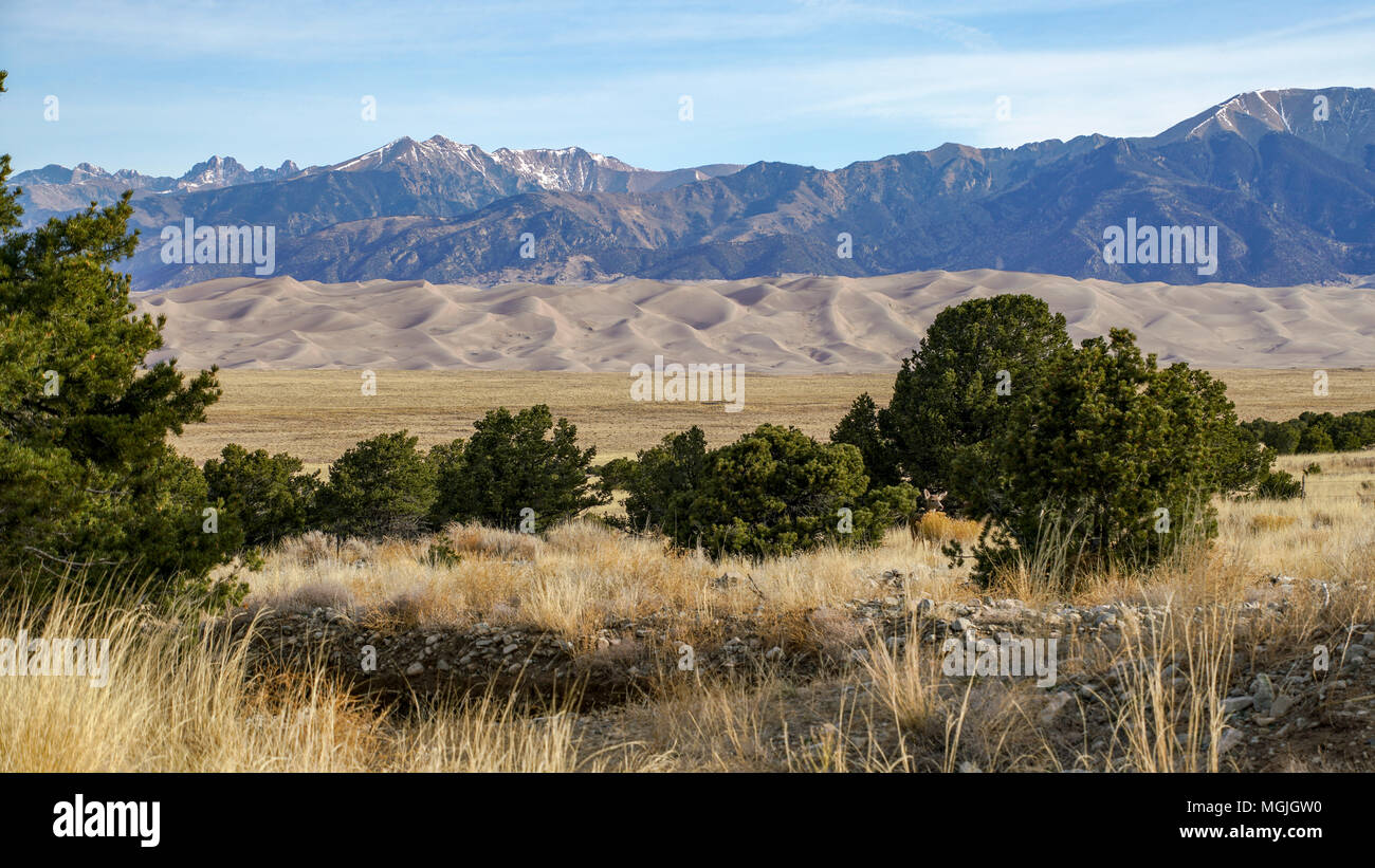 Great Sand Dunes National Park; Colorado; USA; early spring morning. There is a deer in the photo - do you see him? - Stock Image