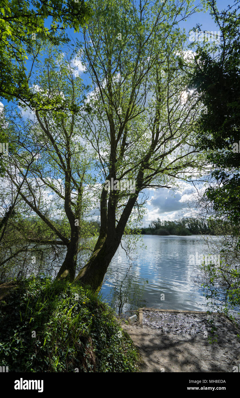 tree-by-lake-milton-country-park-MH8EDA.