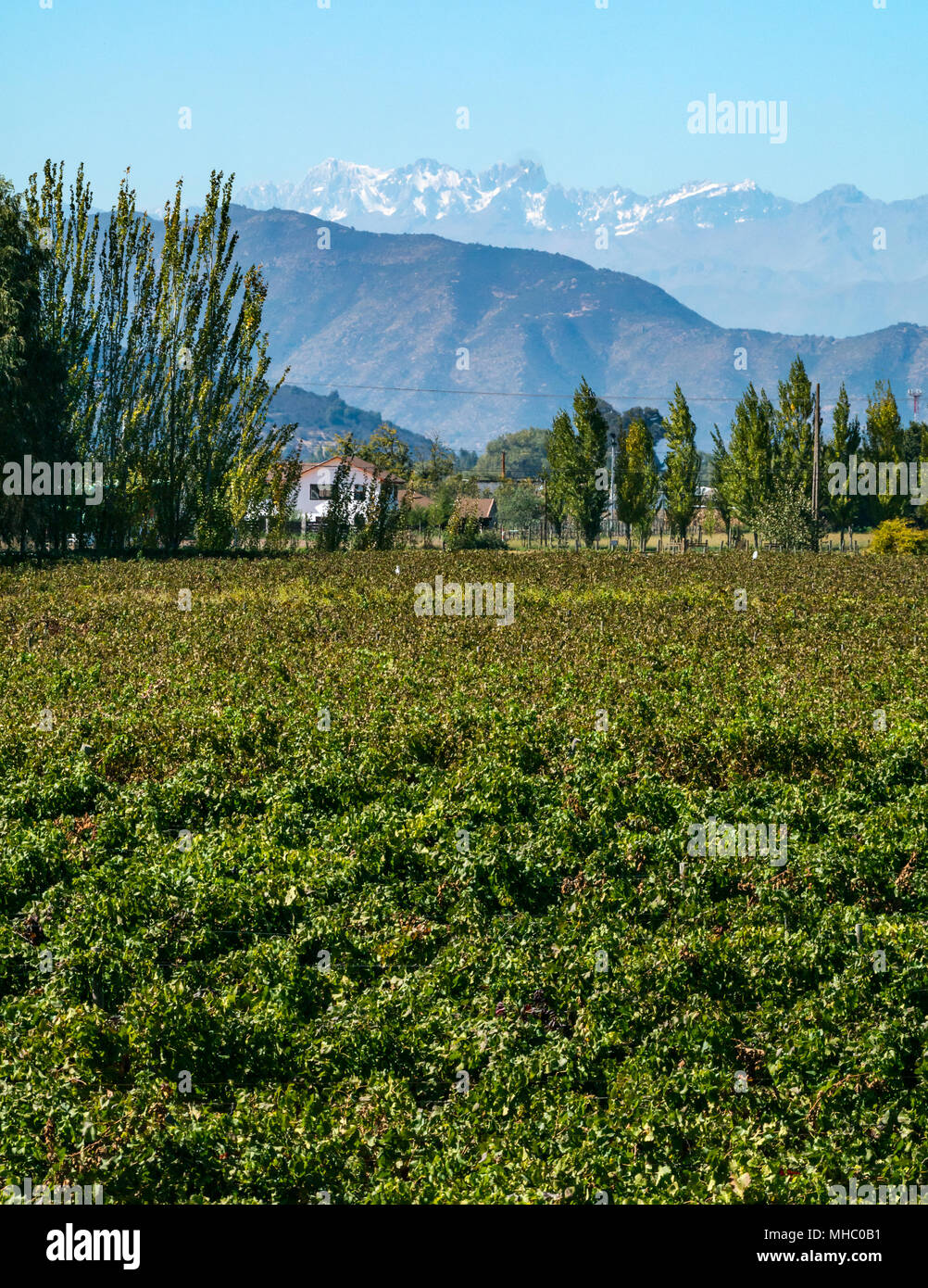 view-across-vineyard-to-foothills-and-th