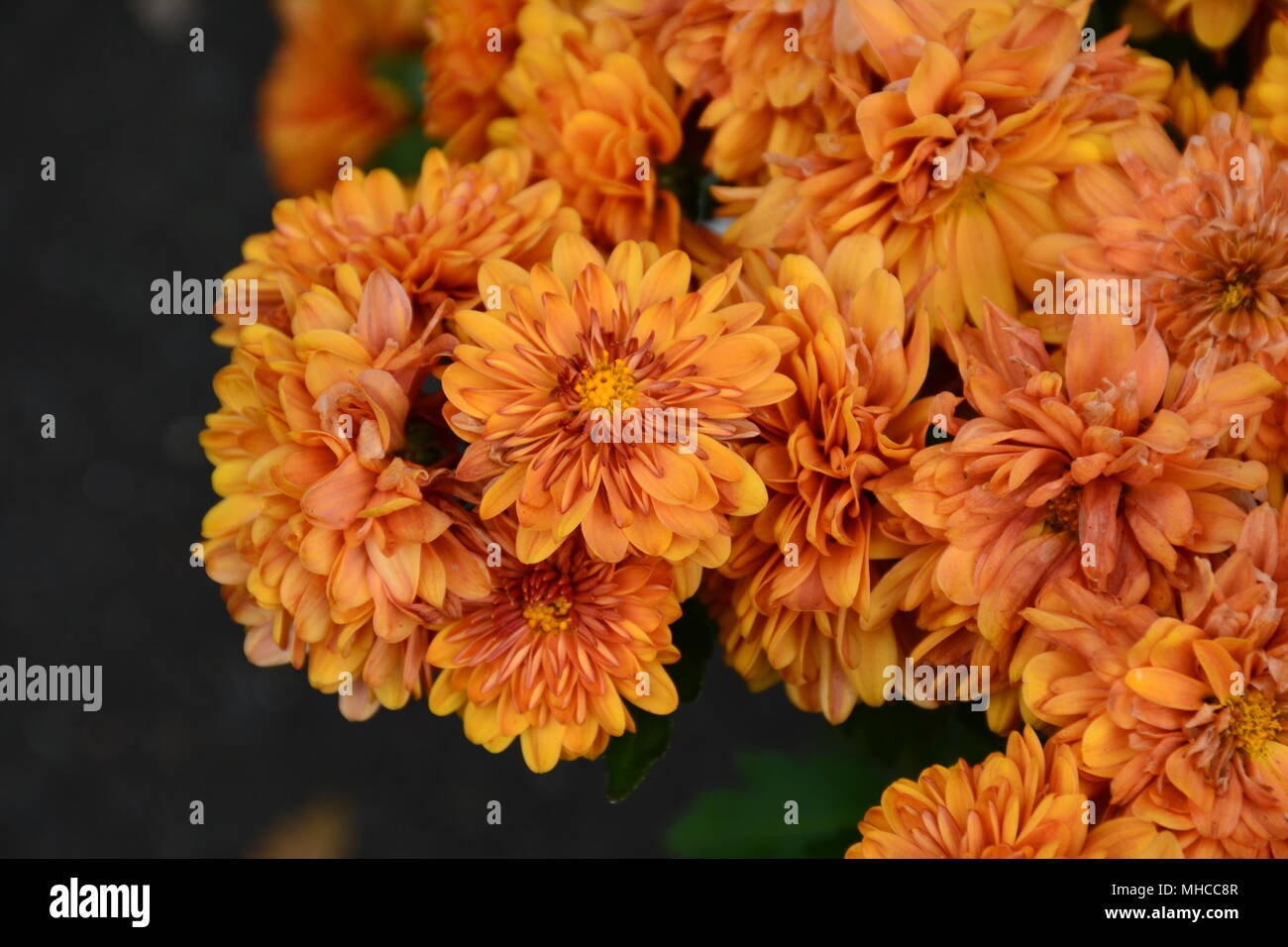 Orange Delicate Pretty Marigold Flowers Stock Photo 182825911 Alamy