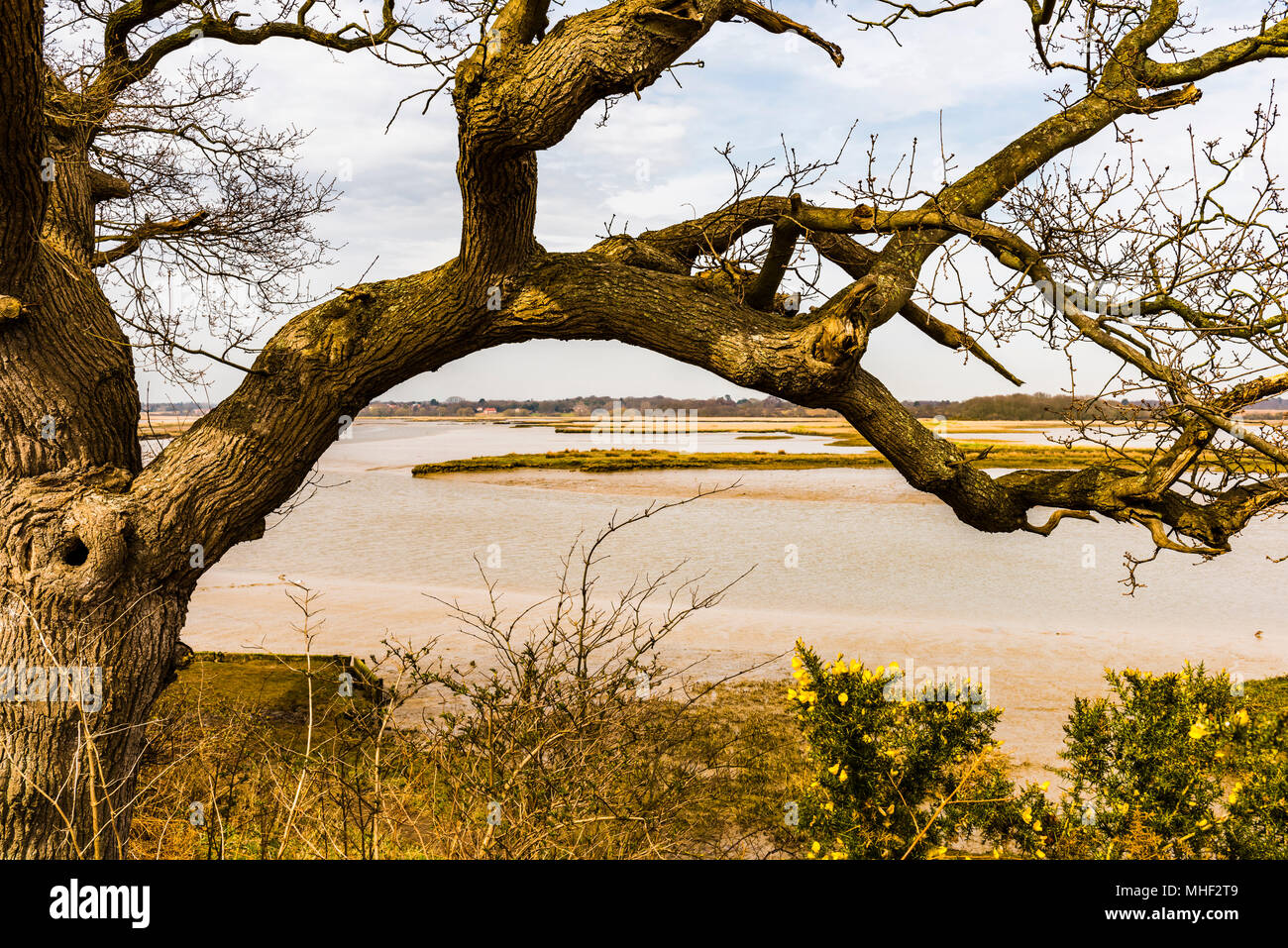 View over the River Alde estuary, near Aldeburgh, Suffolk, UK - Stock Image
