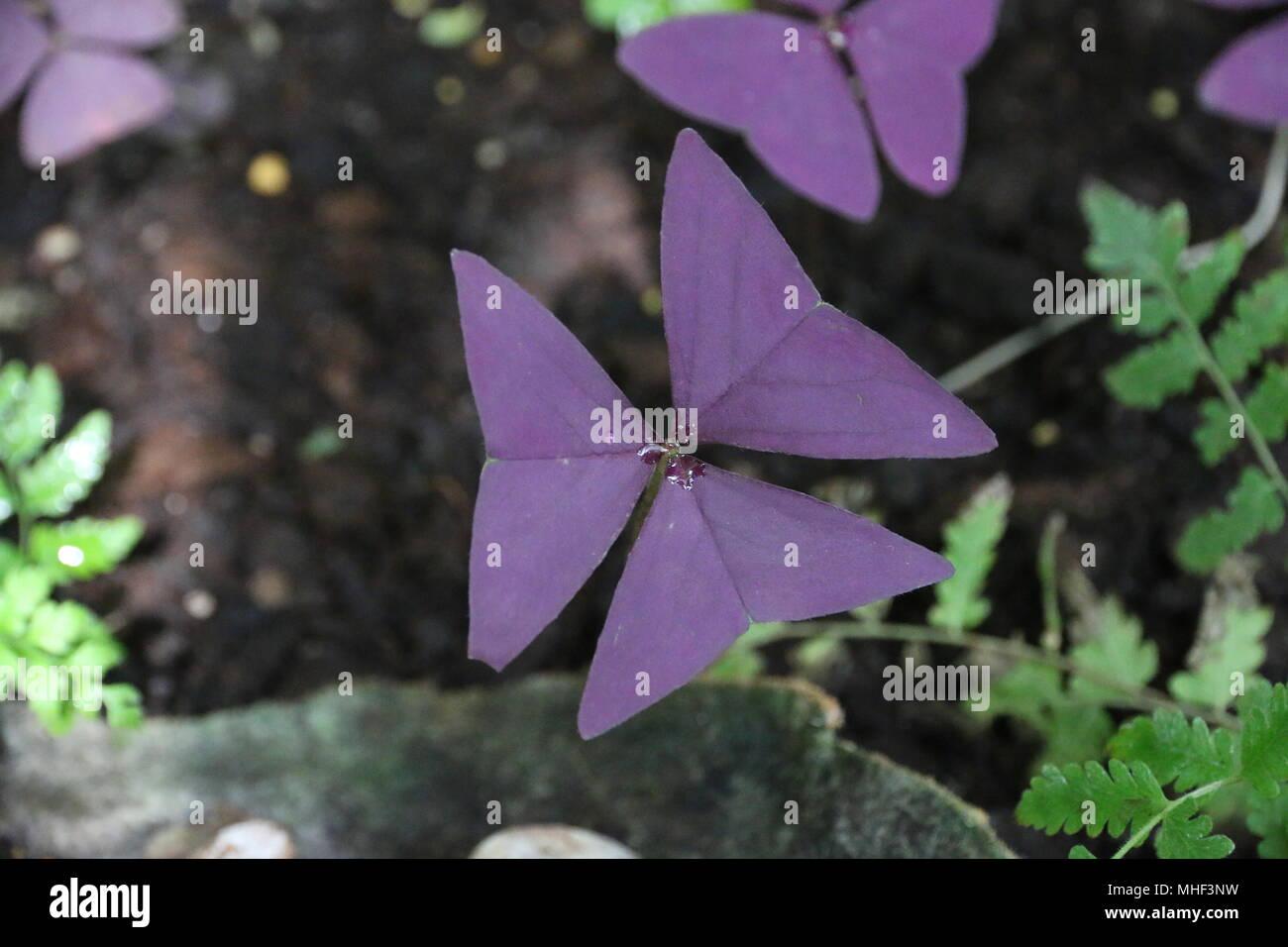 Beautiful Purple Unique Tropical Flowers Stock Photo 182885077 Alamy