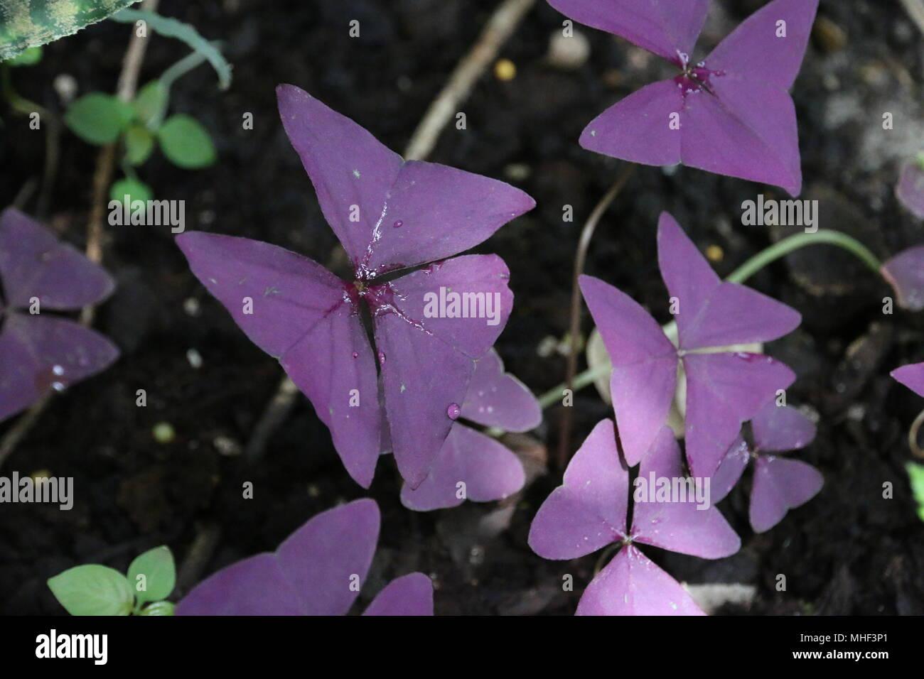 Beautiful purple unique tropical flowers stock photo 182885081 alamy beautiful purple unique tropical flowers izmirmasajfo