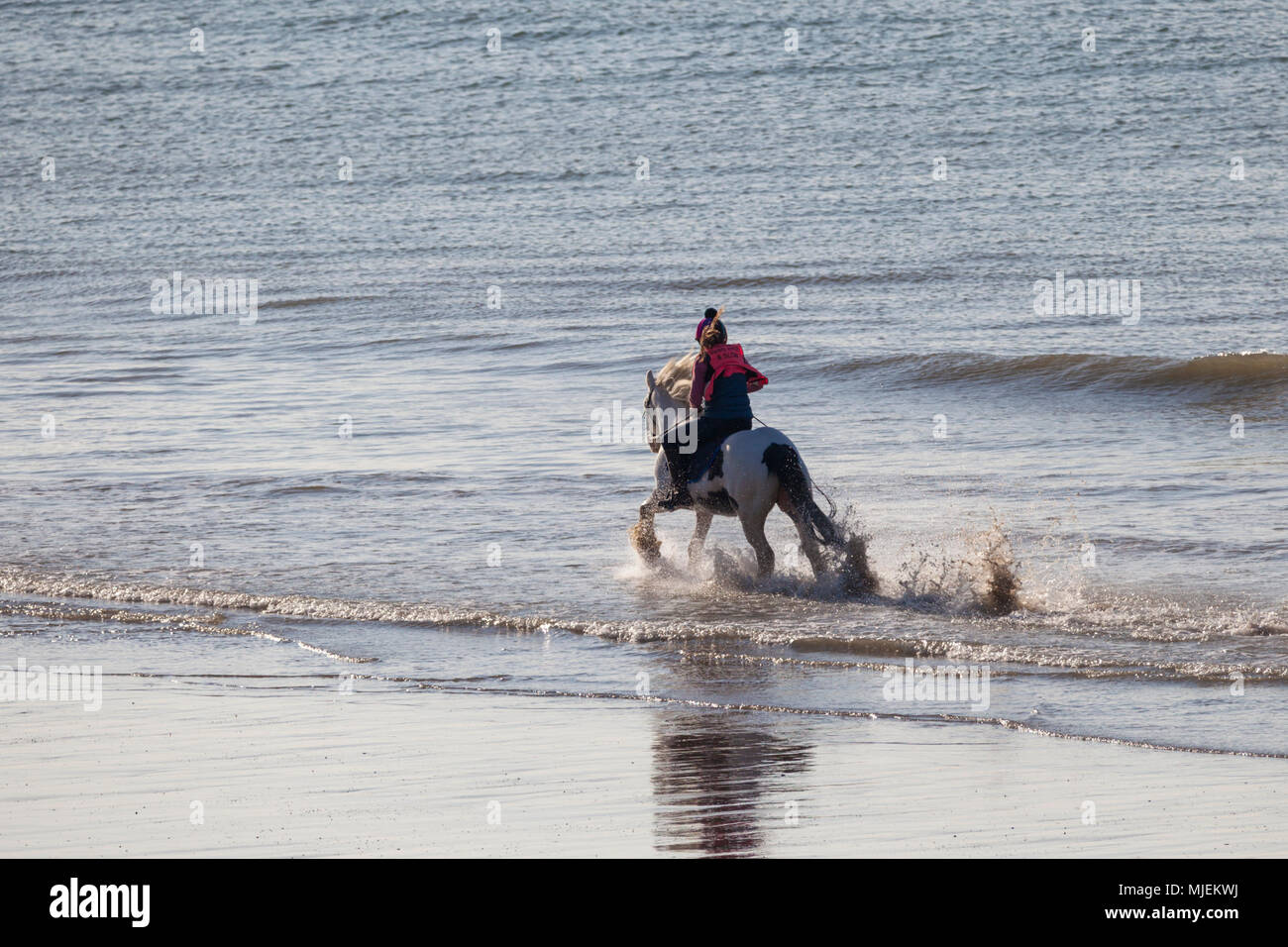 horse-rider-on-a-beach-hastings-uk-MJEKW