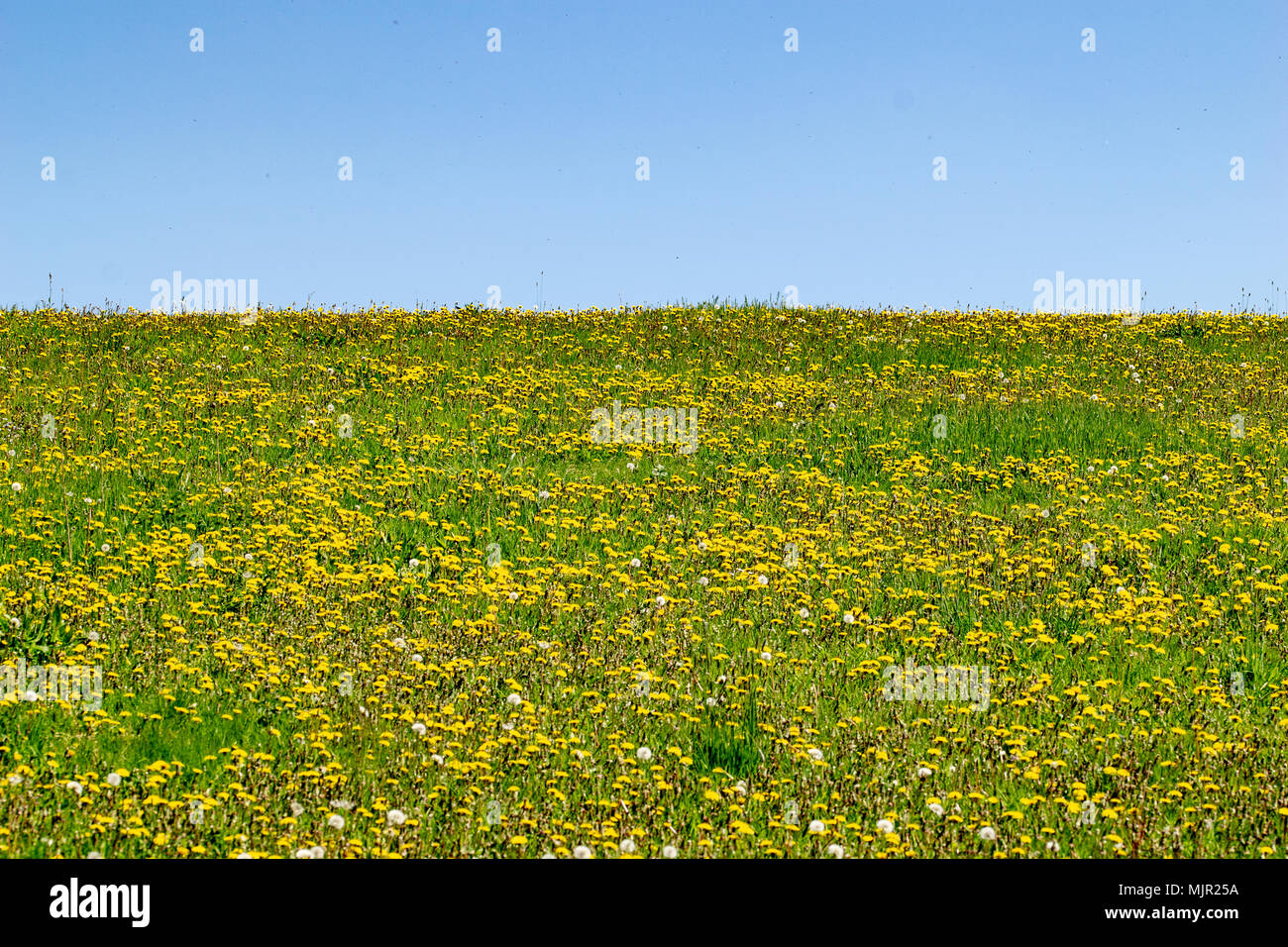 Spring bank holiday stock photos spring bank holiday stock images hot spring bank holiday with fields of wild flowers and honey bees collecting nectar pollen from mightylinksfo Choice Image