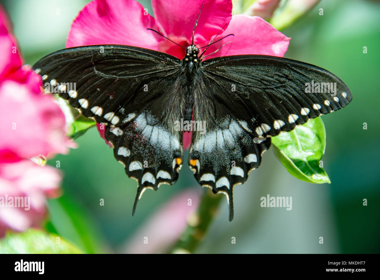 Wide Spread Wings Stock Photos & Wide Spread Wings Stock Images - Alamy