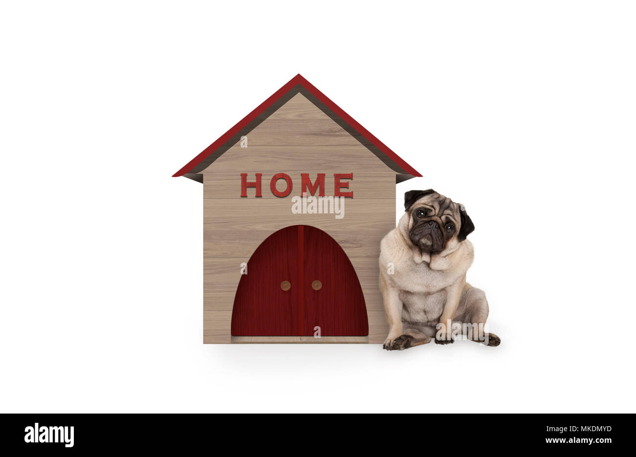 cheeky pug puppy dog sitting down next to dog house with sign Home, isolated on white background - Stock Image