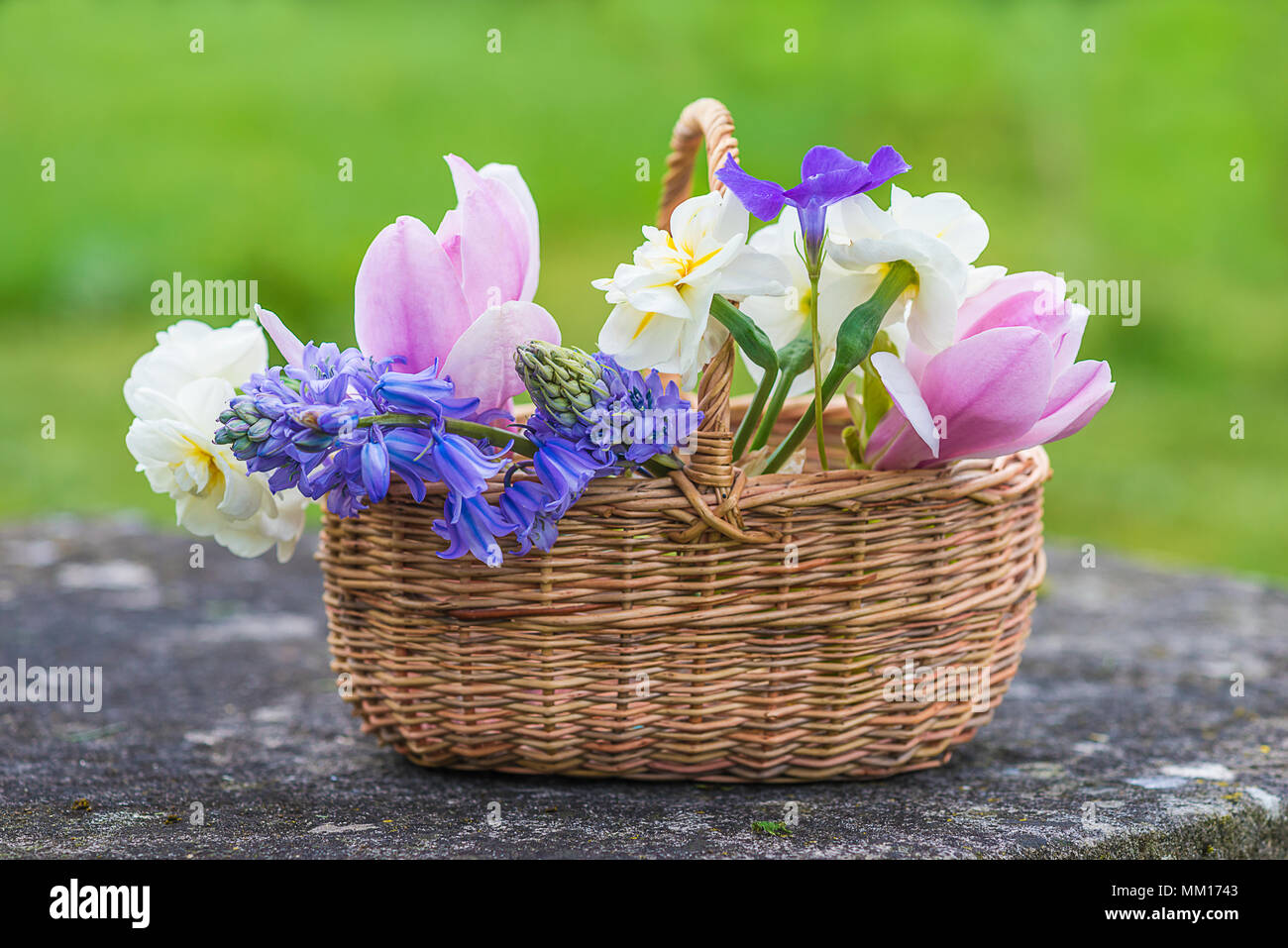 Wicker Basket With Bouquet Of Spring Flowers Pink Magnolia White