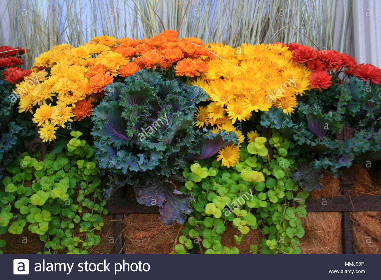 Fall flowers and decorative cabbage plants in a flower box on a fall flowers and decorative cabbage plants in a flower box on a windowsill izmirmasajfo