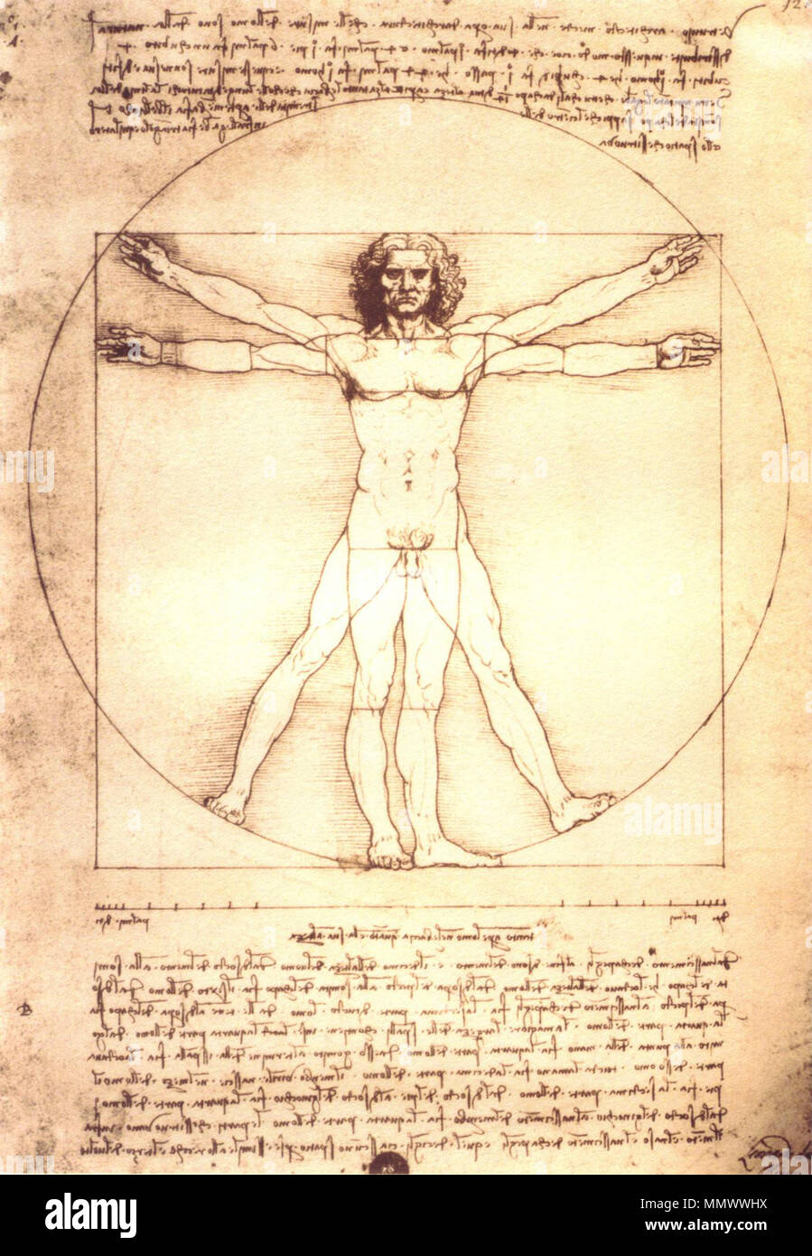 English This Image Is A Copy Of The Leonardo Da Vincis Anatomical