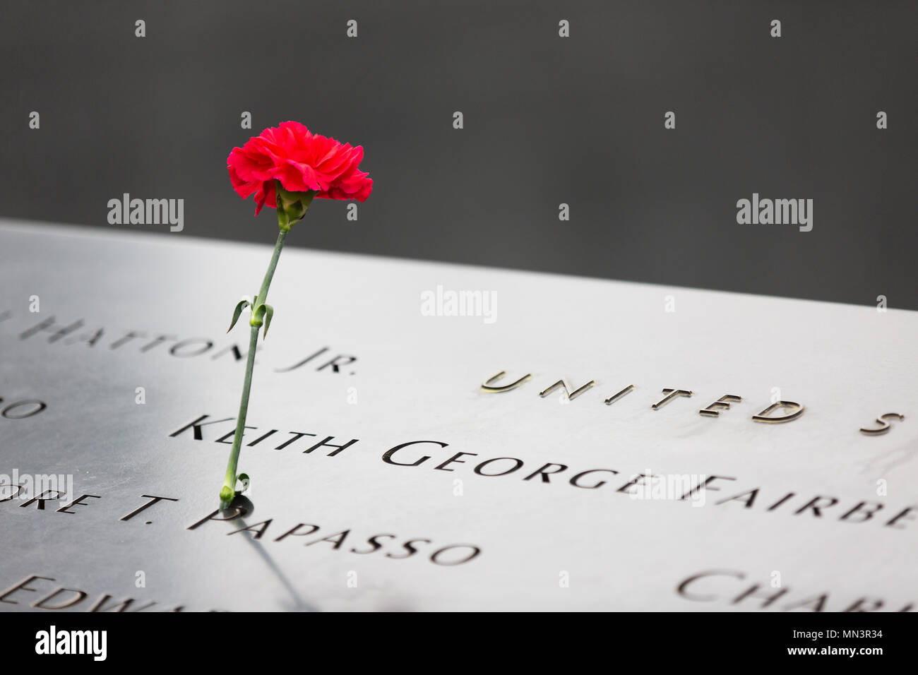 a-single-red-carnation-in-tribute-to-one-of-the-victims-of-the-11-september-2001-attack-the-911-memorial-pools-downtown-new-york-new-york-city-usa-MN3R34.jpg