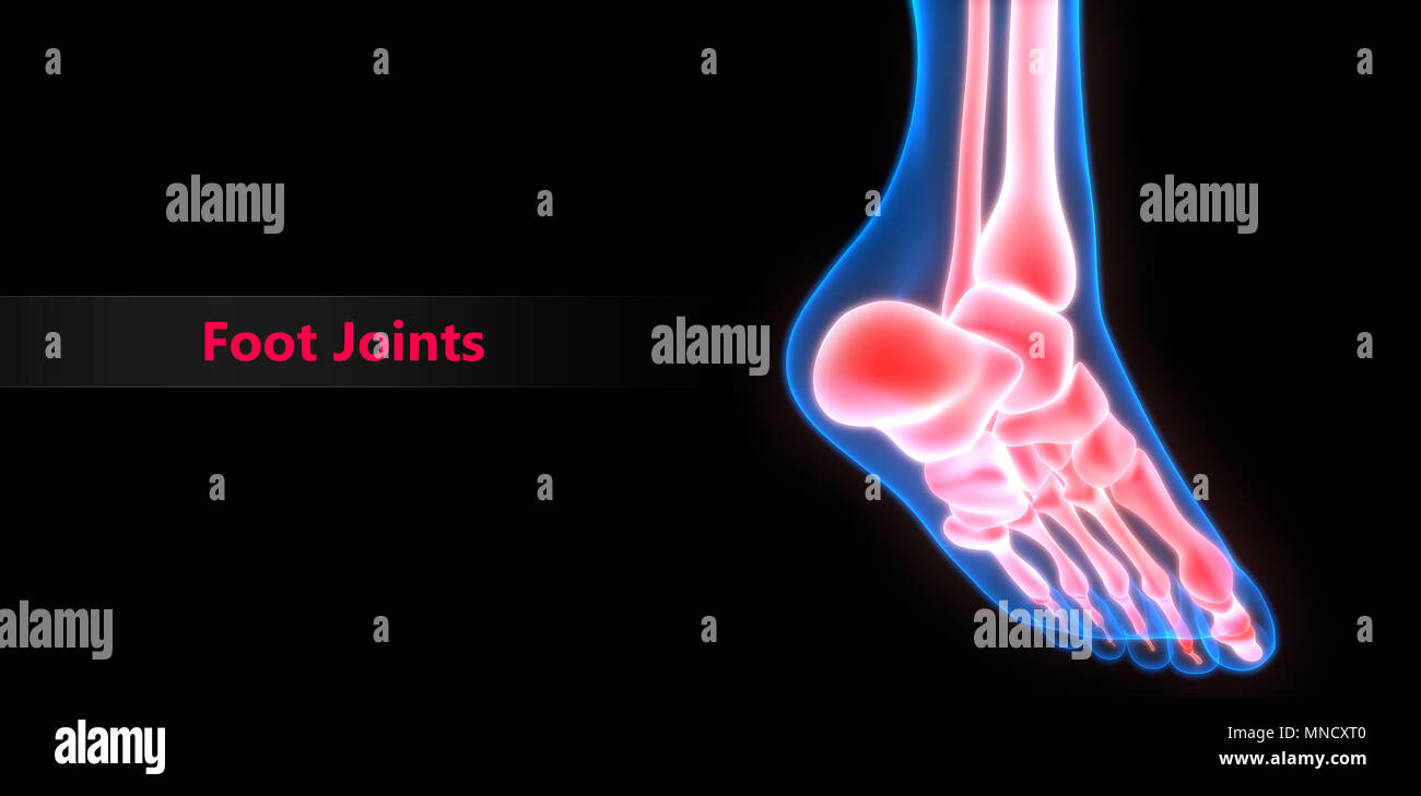 Human Skeleton System Bone Joint Pains Anatomy Stock Photo