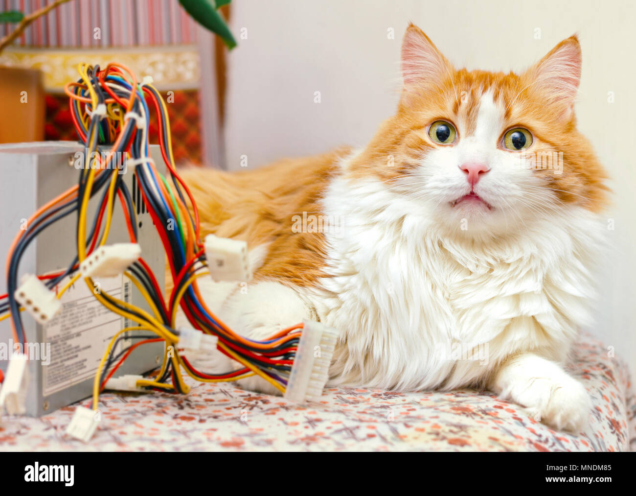 Pretty adult red cat and computer wires in bright home interior ...