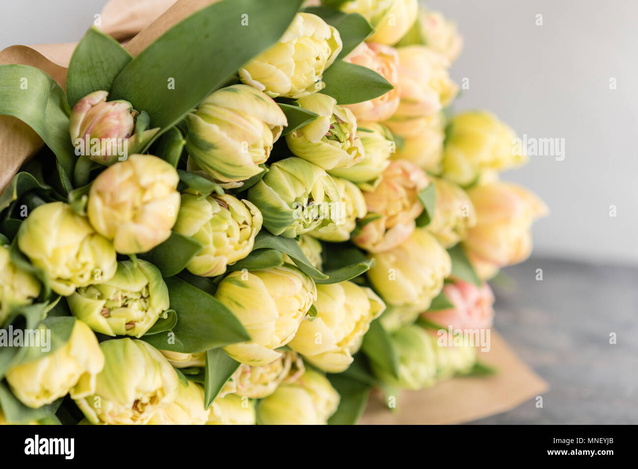 Tulips Of Pastel Yellow Color Big Buds Floral Natural Backdrop