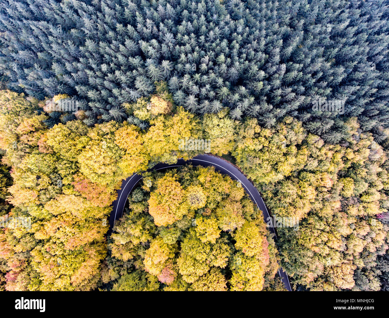 Autumn Forest Road trough the woods in Fall season - Stock Image
