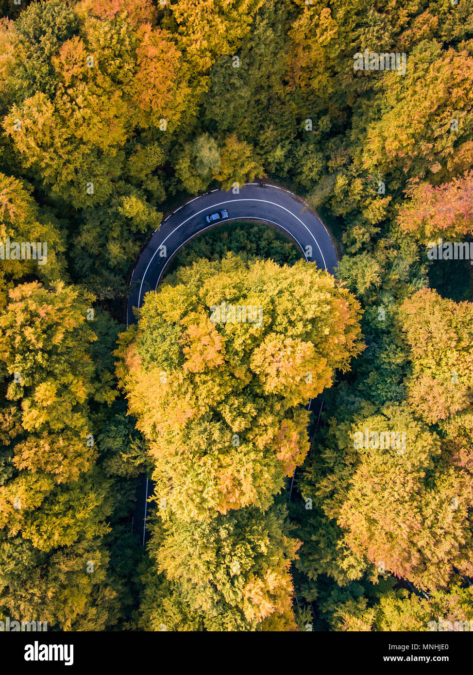 Road trip trough the forest on winding road in autumn season - Stock Image