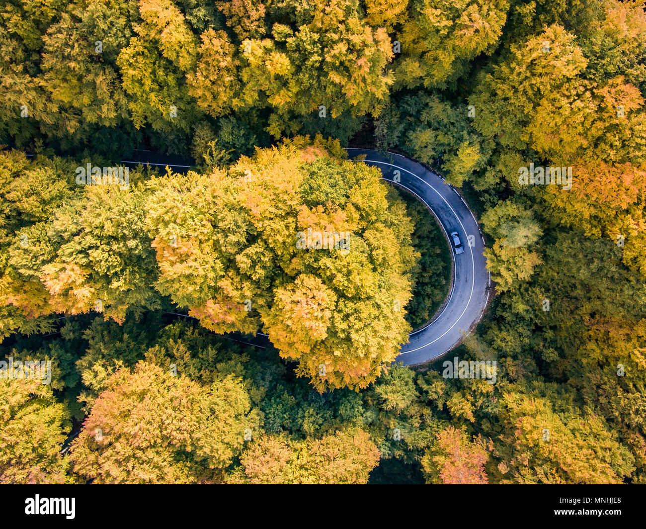 Road trip trough the forest on winding road in autumn season aerial view of a car on winding road - Stock Image