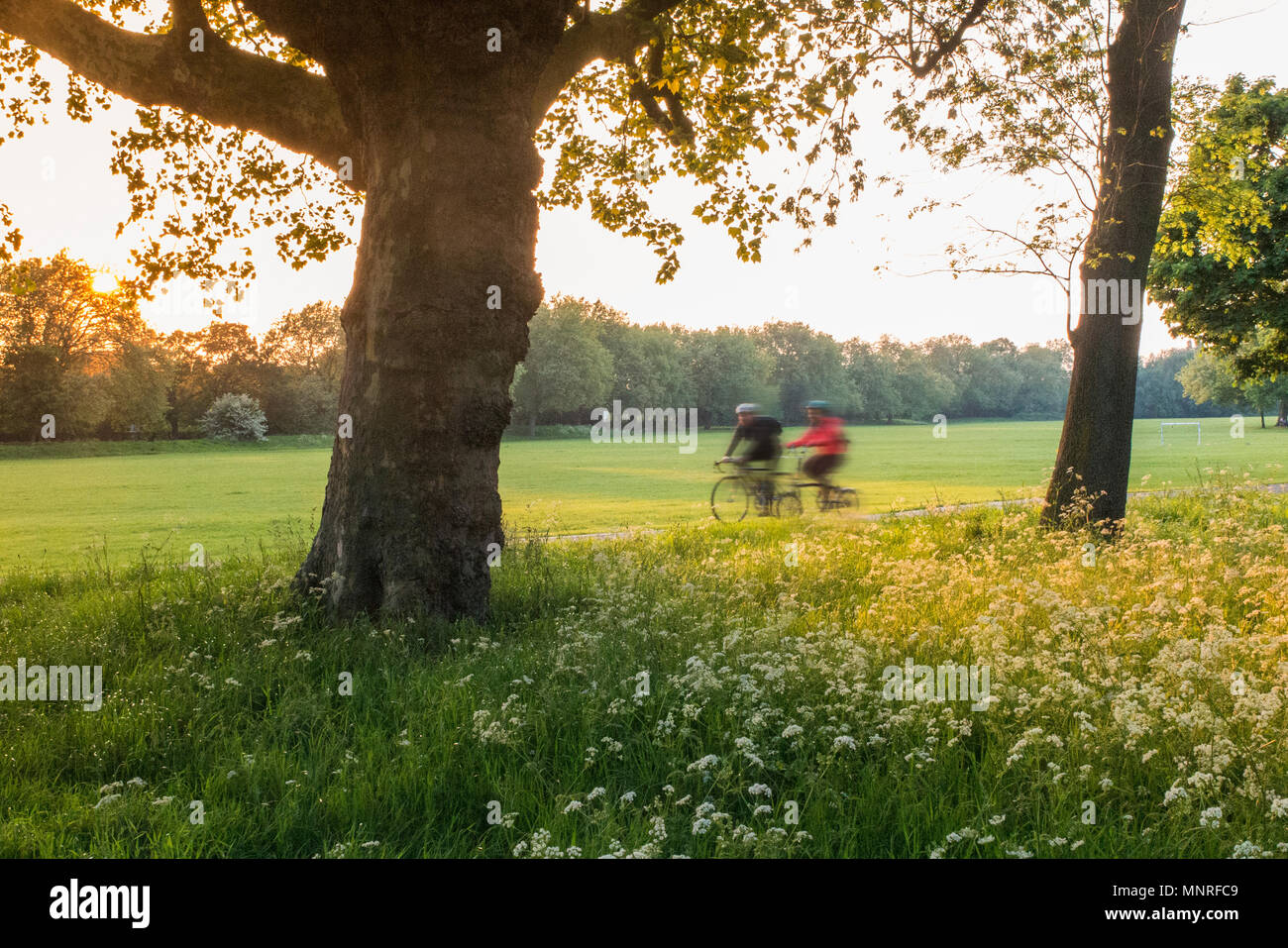 Cycling home in a London park - Stock Image
