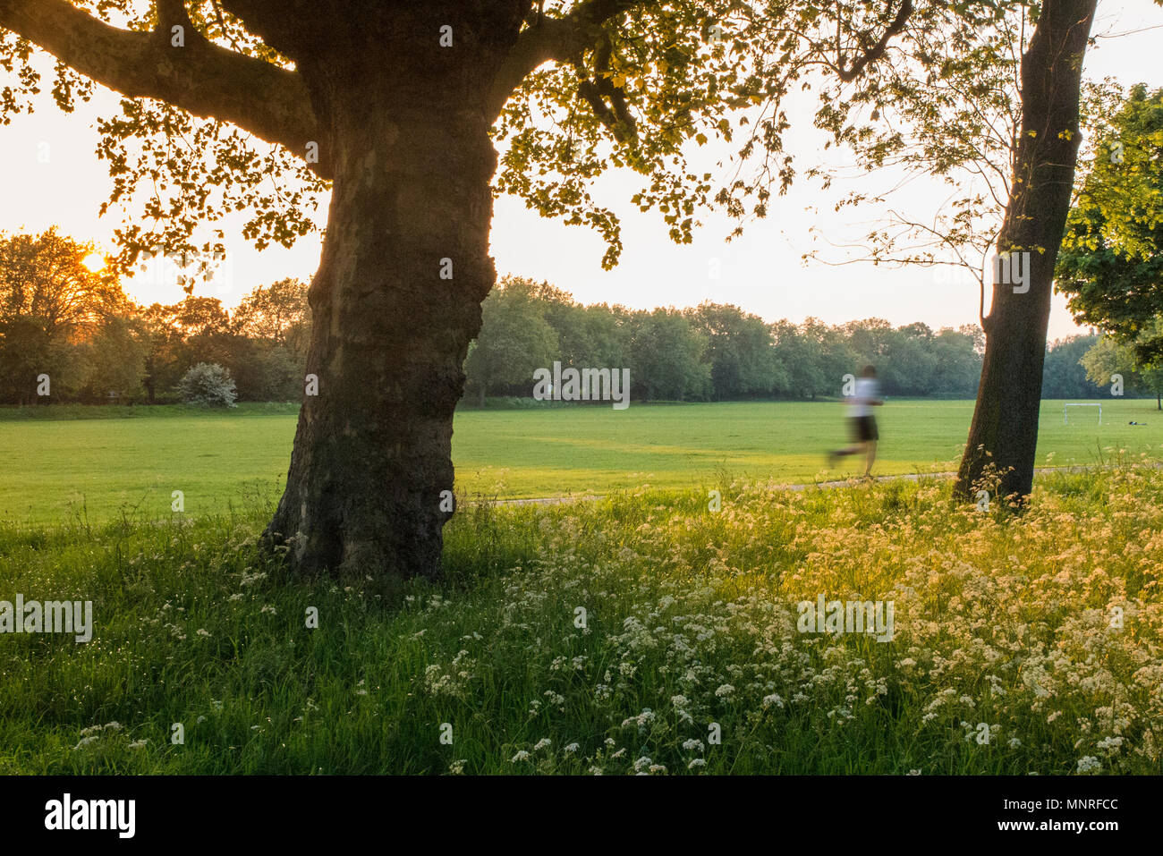 Running in a London park as the sun goes down - Stock Image