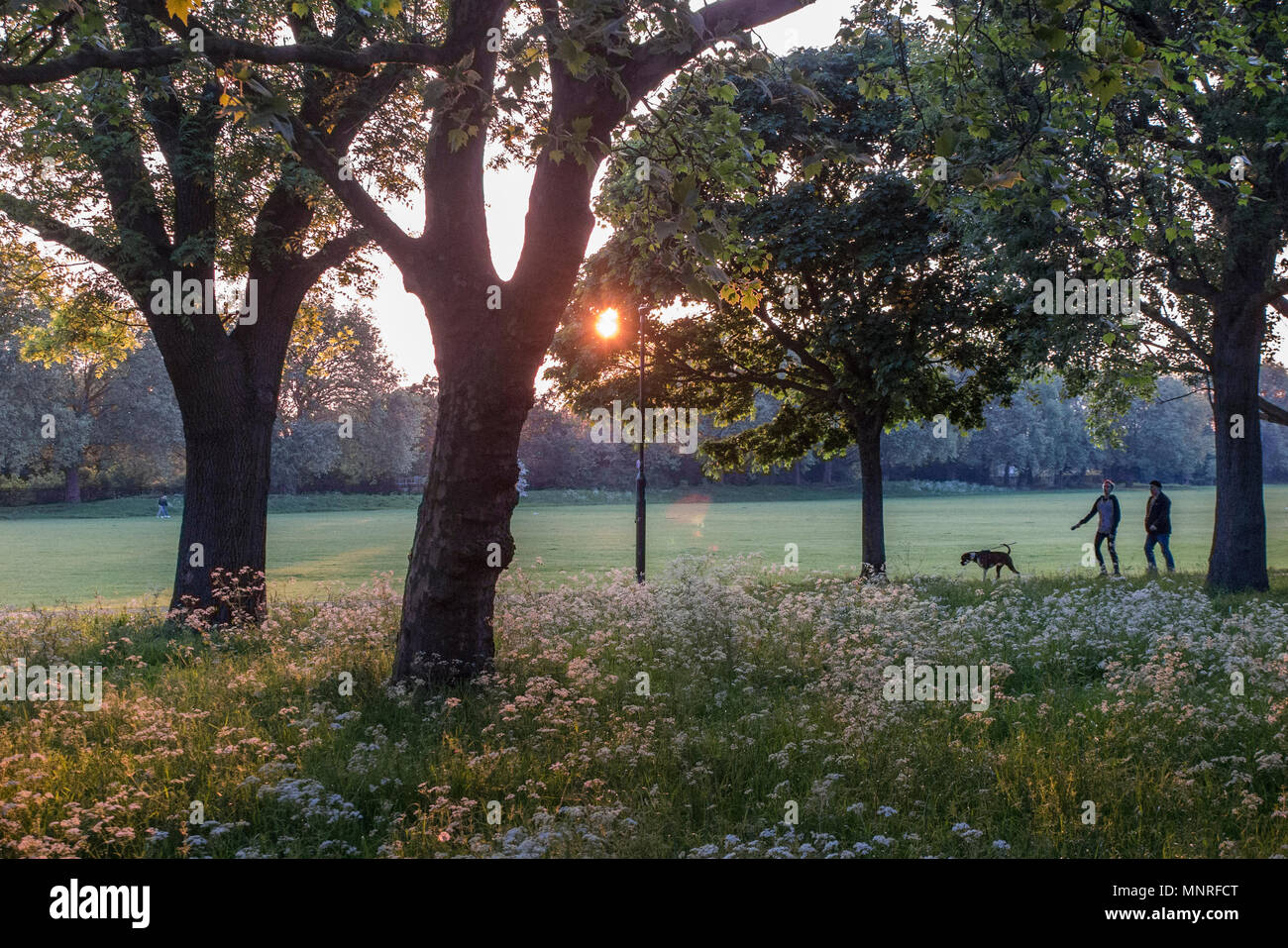 Taking the dog for a walk on a summers evening in a London park - Stock Image