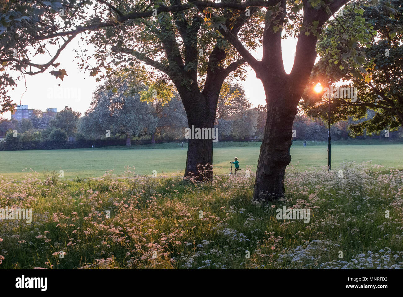 A young child scooters in a London park - Stock Image