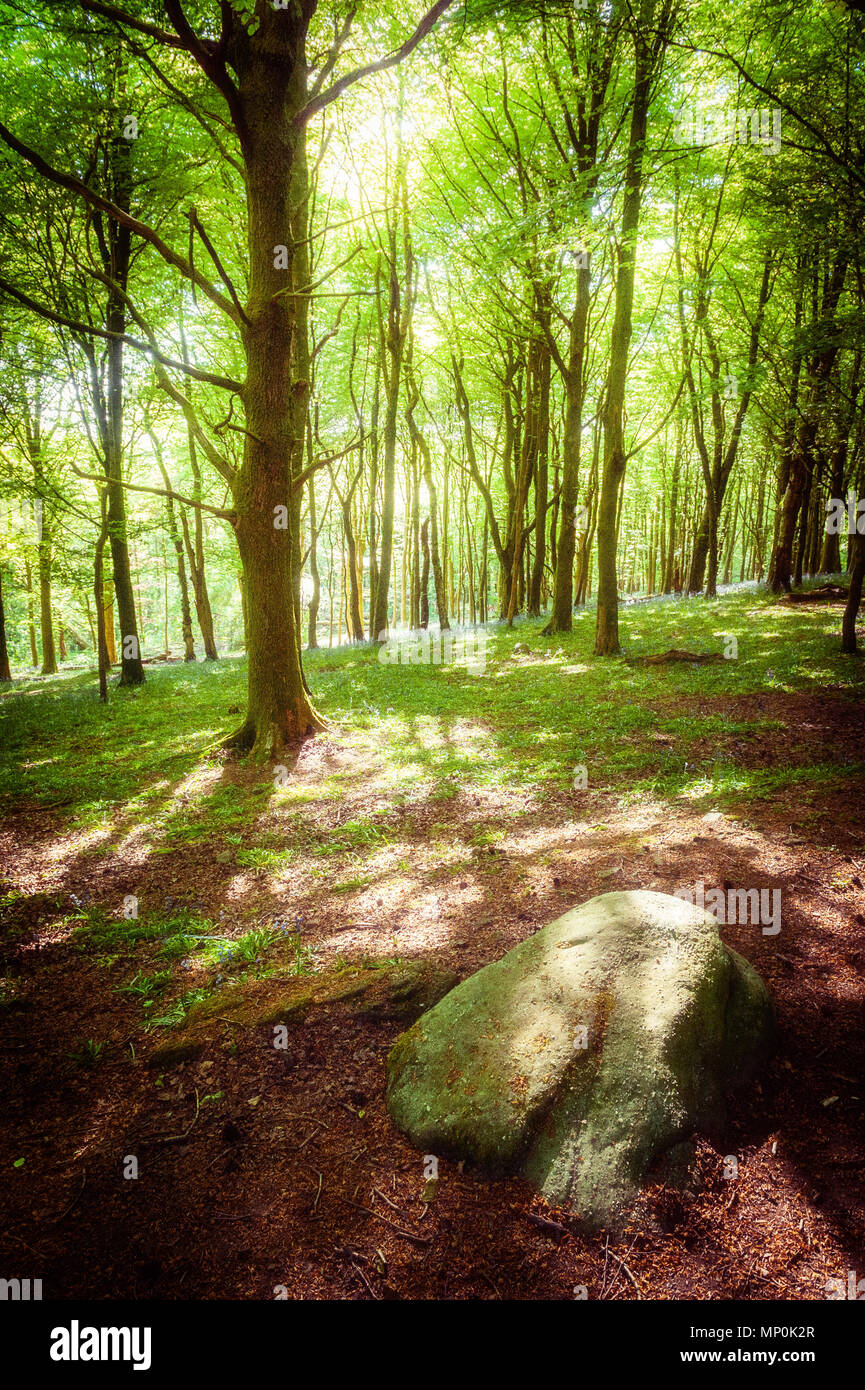 dappled-shade-at-the-wenallt-an-area-of-