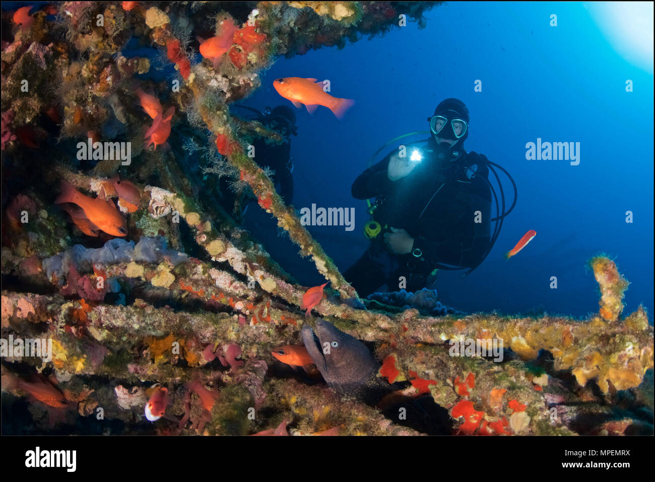 scubadiver-with-torch-cardinalfish-apogo