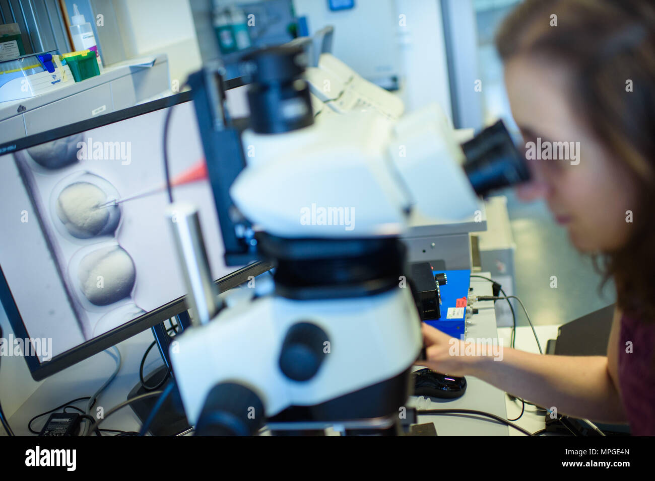 22 May 2018, Germany, Berlin: A researcher watches the CRISPR/Cas9 process through a stereomicroscope at the Max-Delbrueck-Centre for Molecular Medicine. Photo: Gregor Fischer/dpa Stock Photo