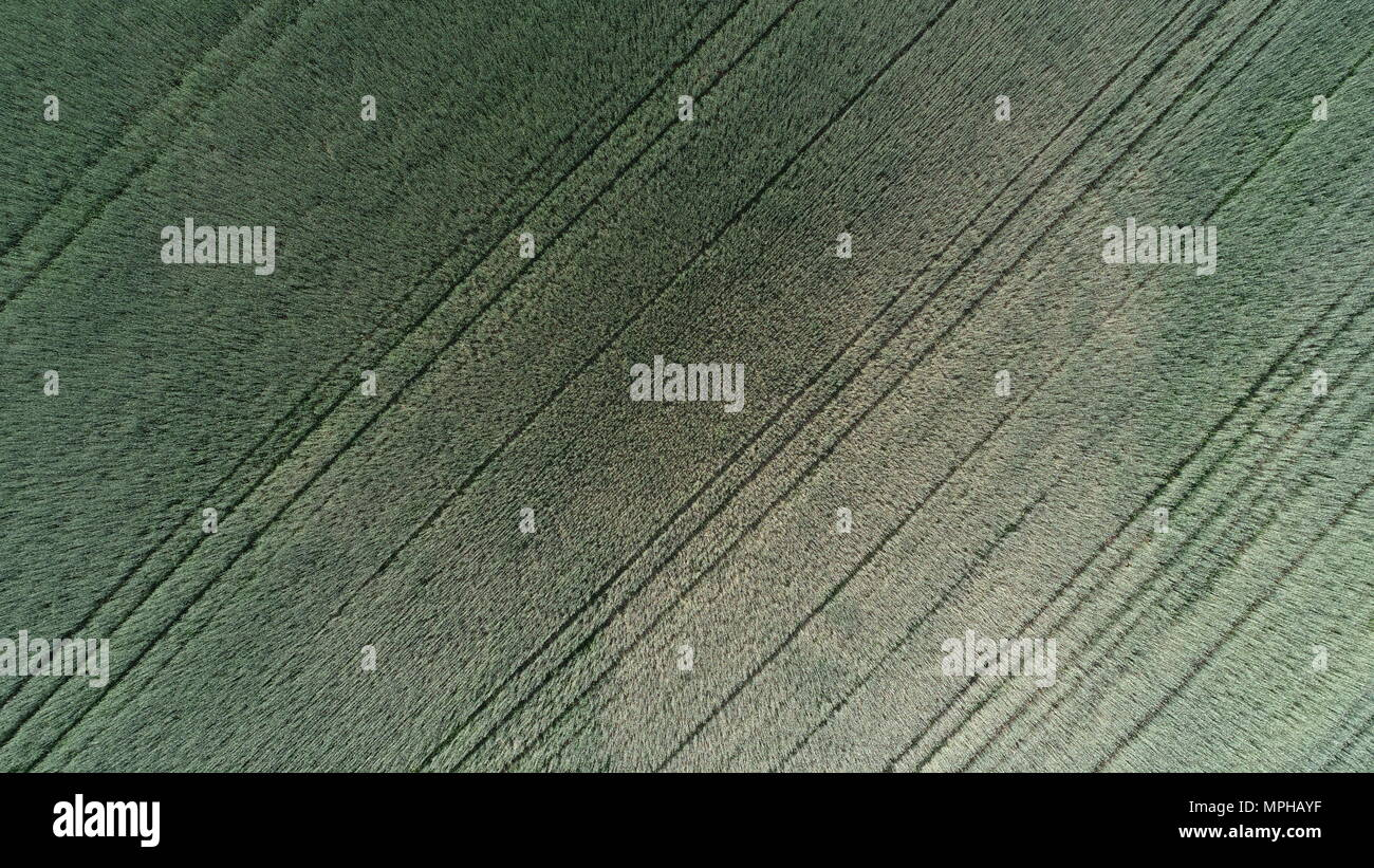 aerial-photo-of-a-field-with-barley-MPHAYF.jpg