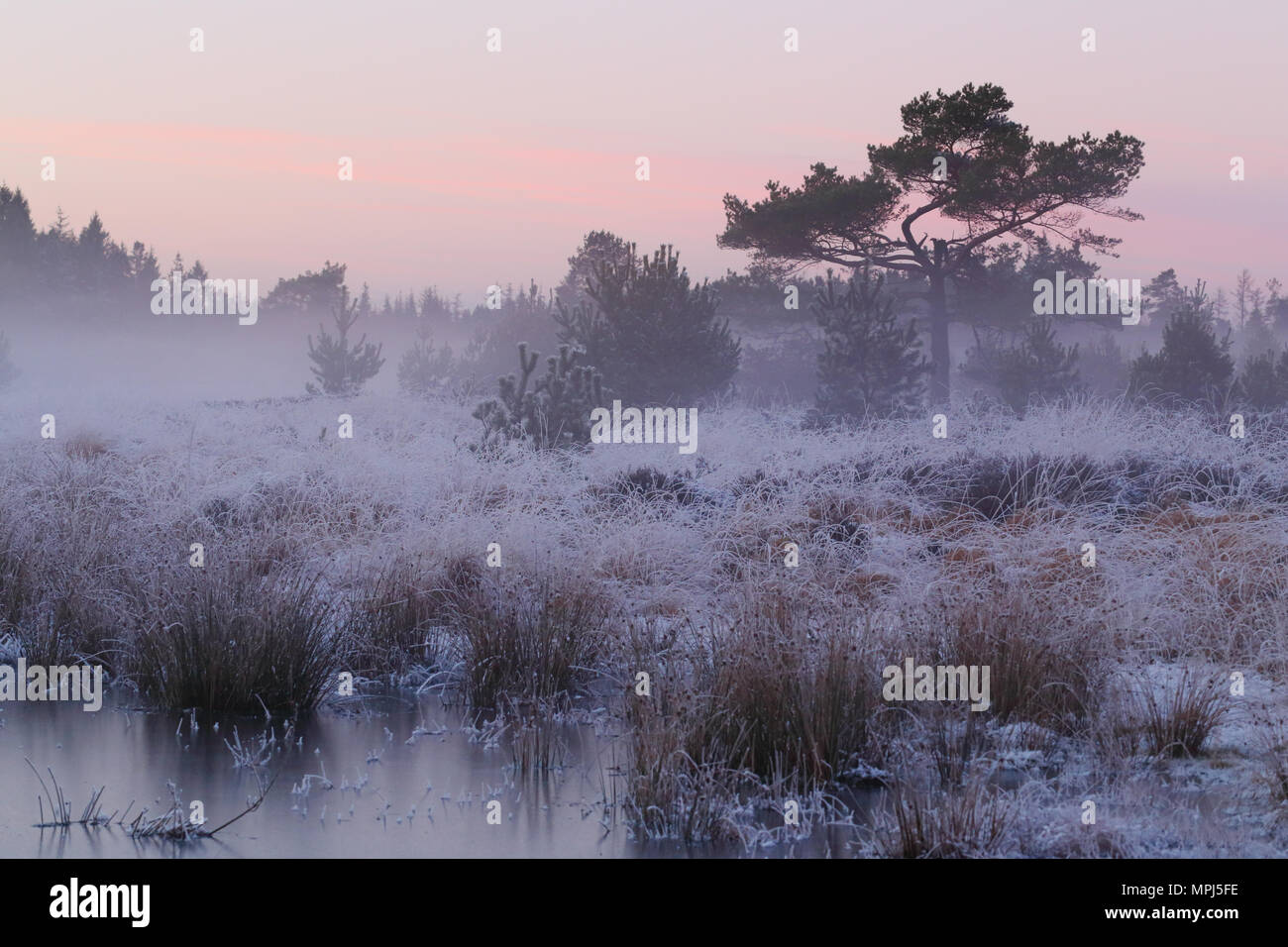 frost-and-sunset-in-frederikshaab-planta