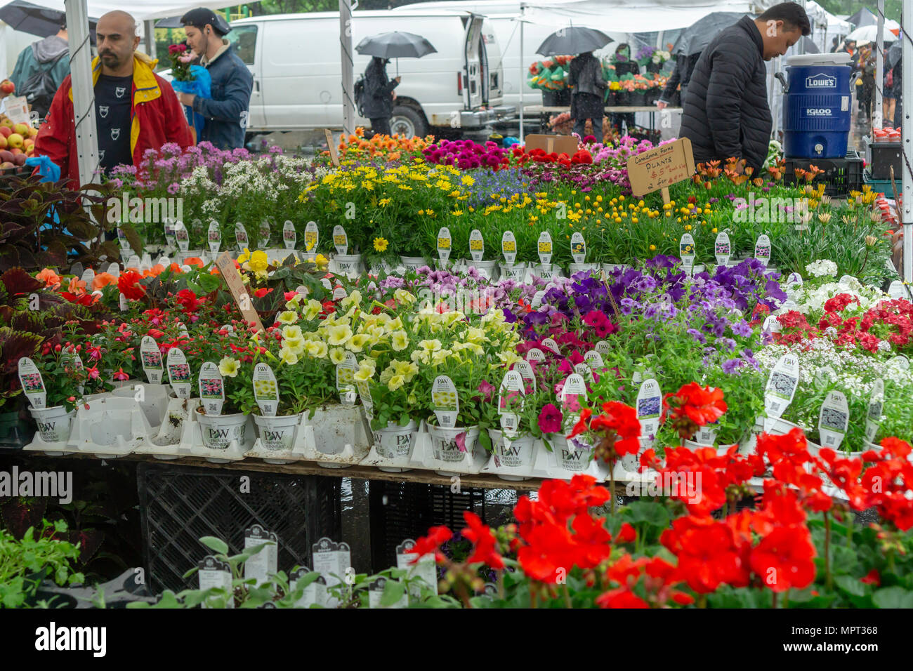 A selection of spring flowers at the union square greenmarket in new a selection of spring flowers at the union square greenmarket in new york on rainy saturday mightylinksfo