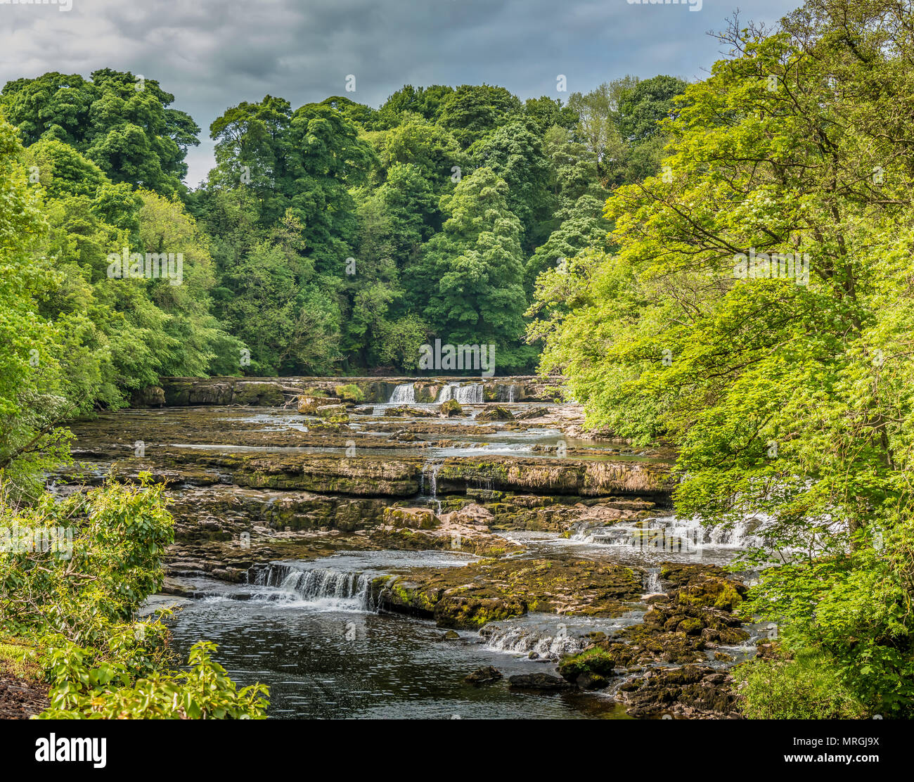 Upper Falls, Aysgarth, Wensleydale, Yorkshire Dales National Park, UK in late spring with very low water level Stock Photo