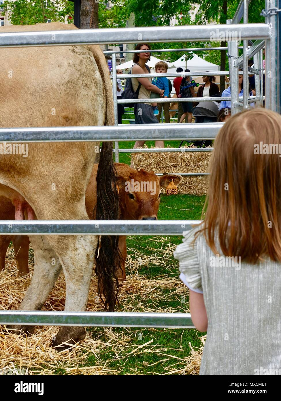 little-girl-and-small-calf-tookimg-at-on