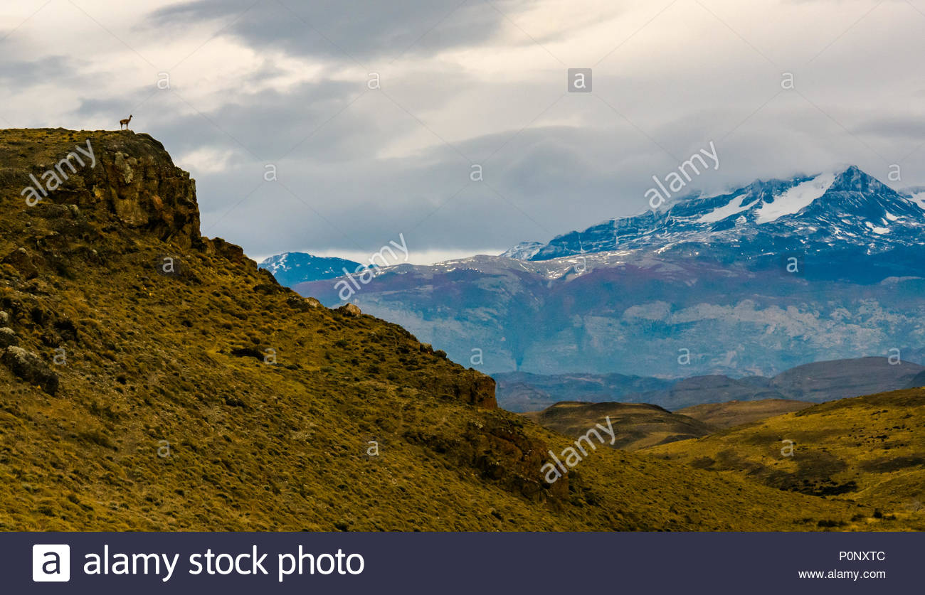 guanaco-lookout-on-cliff-lama-guanicoe-t