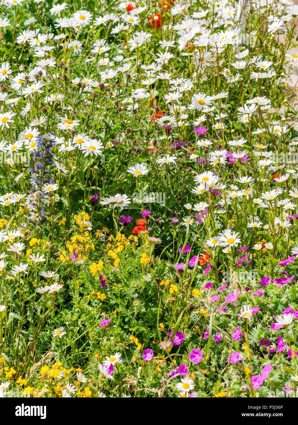 variety-of-mixed-coastal-wildflowers-at-