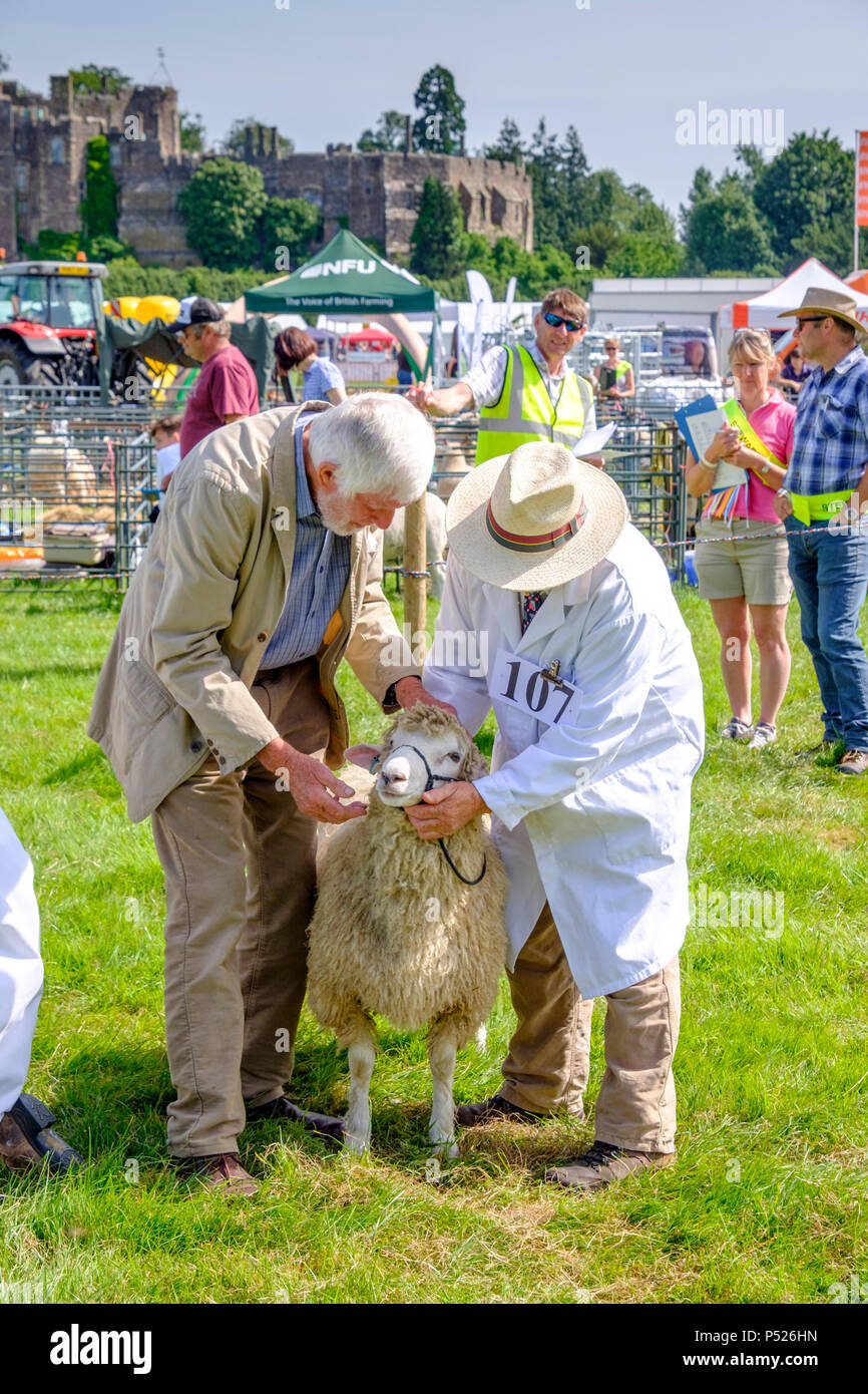 gloucestershire-uk-24th-june-2018-the-annual-berkeley-show-is-held-in-the-lee-of-historic-berkeley-castle-it-is-an-opportunity-for-local-country-business-to-network-local-crafts-are-displayed-farriers-hold-demonstrations-and-contests-and-tractors-are-polished-and-paraded-local-animals-were-present-as-well-as-alpacas-who-are-always-popular-mr-standfastalamy-live-news-P526HN.jpg