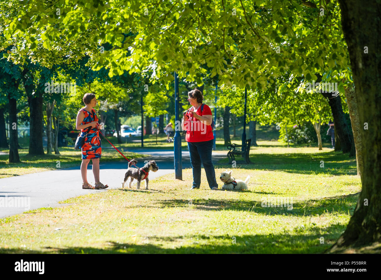 Aberystwyth, Wales, UK. 25th June, 2018.   UK Weather:  People walking their dogs along the tree lined Plas Crug park in Aberystwyth, at the start of what promises to be yet another scintillating day of hot unbroken sunshine.  The UK is heading  into a mini heatwave, with temperatures forecast to hit 29º or 30º Celsius by the middle of the week  photo © Keith Morris / Alamy Live News Stock Photo