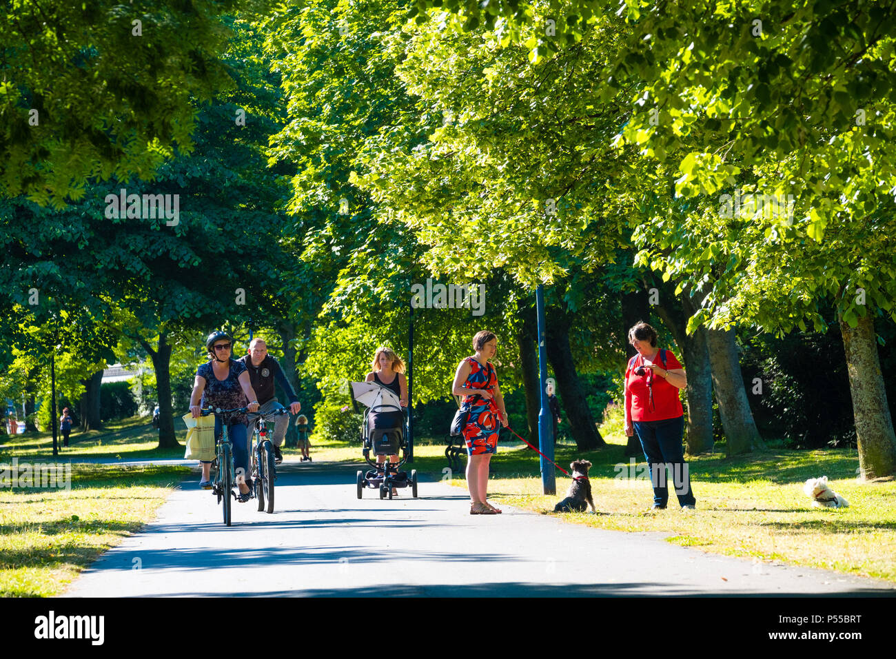 Aberystwyth, Wales, UK. 25th June, 2018.   UK Weather:  People walking and cycling along the tree lined Plas Crug park in Aberystwyth, at the start of what promises to be yet another scintillating day of hot unbroken sunshine.  The UK is heading  into a mini heatwave, with temperatures forecast to hit 29º or 30º Celsius by the middle of the week  photo © Keith Morris / Alamy Live News Stock Photo