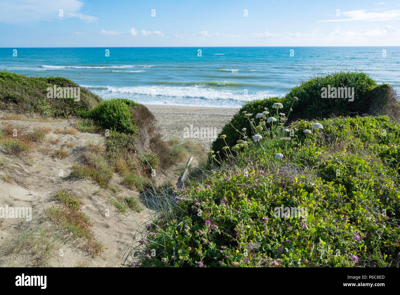 Beach with vegetations of nature reserve near Ostia, Rome, Lazio,  Italy Stock Photo