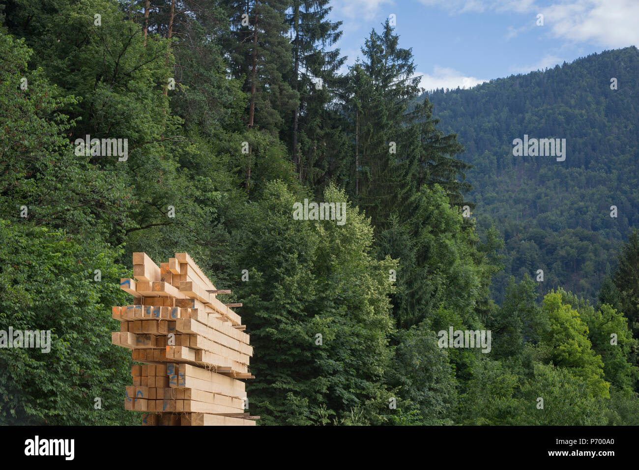 new-sawn-planks-piled-up-in-a-timber-yar