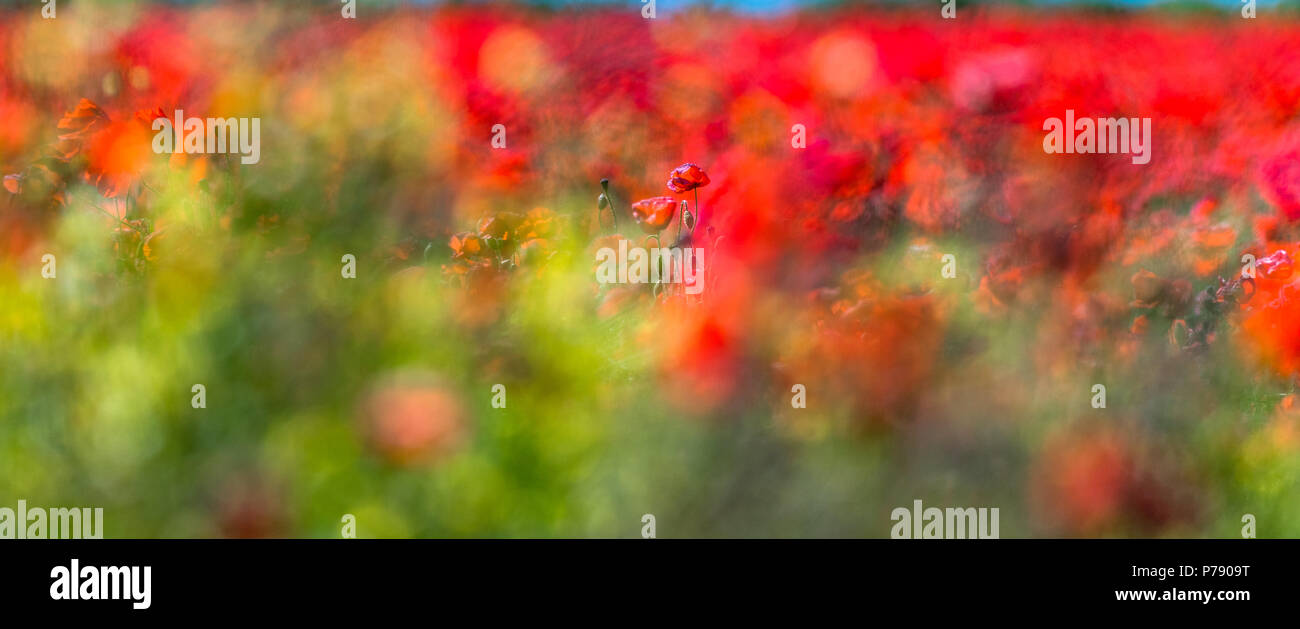 out-of-focus-images-of-colourful-red-pop