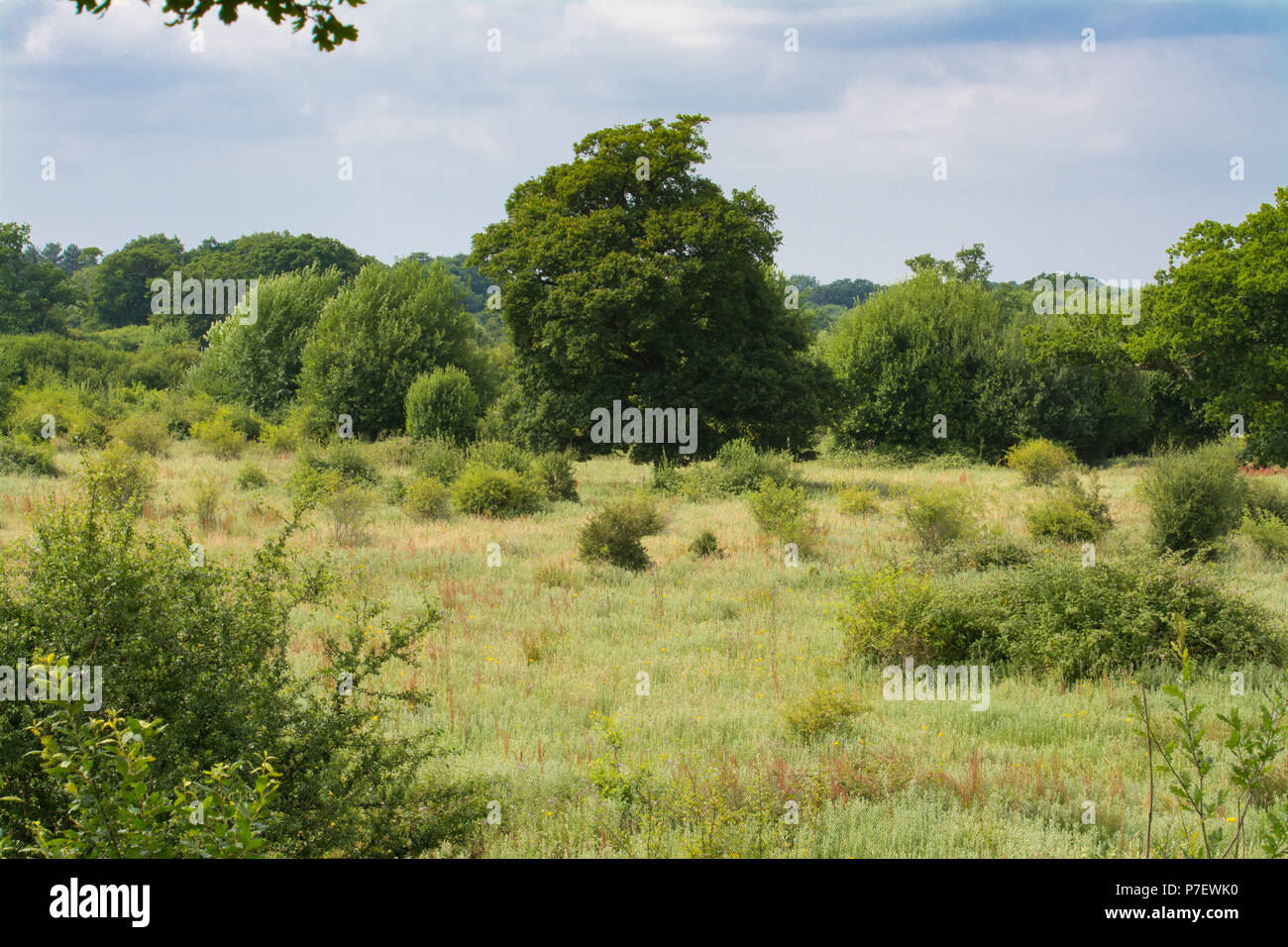 view-from-a-tree-platform-over-the-knepp-estate-wildland-a-rewilding-conservation-project-taking-place-in-west-sussex-uk-in-summer-P7EWK0.jpg