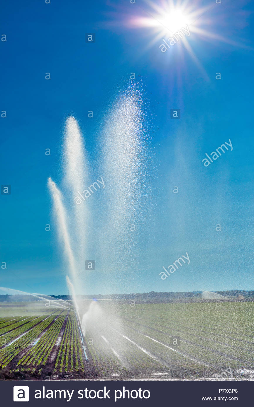 irrigation-of-crops-on-a-polder-marsh-fa